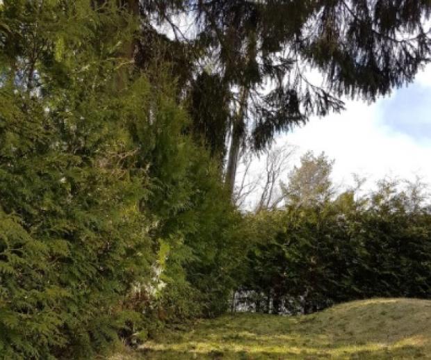 Trær i hagen regler